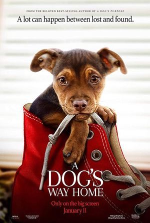 Midday Movie: A Dog&