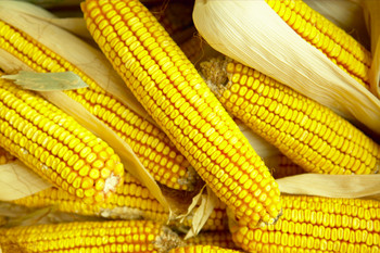Corn – Simply A-Maize-ing-FULL! NO WAITLIST AVAILABLE